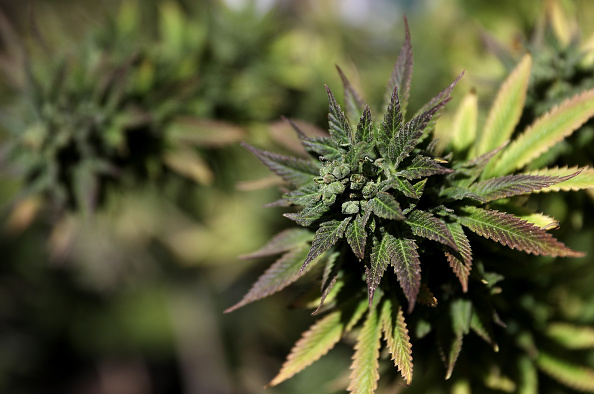 Medical Pot Users Face Barriers In Utah After Legalization