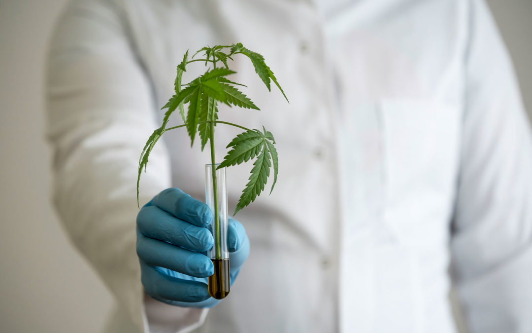 The latest in cannabis research from summer/fall 2019
