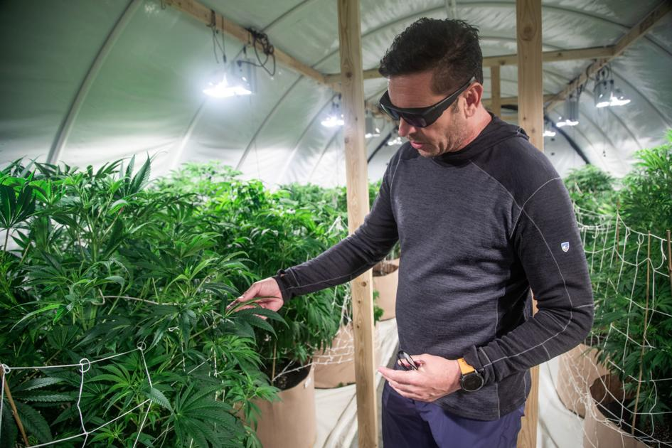 Utah cannabis firm to open pharmacy in South Ogden, growing in Box Elder County