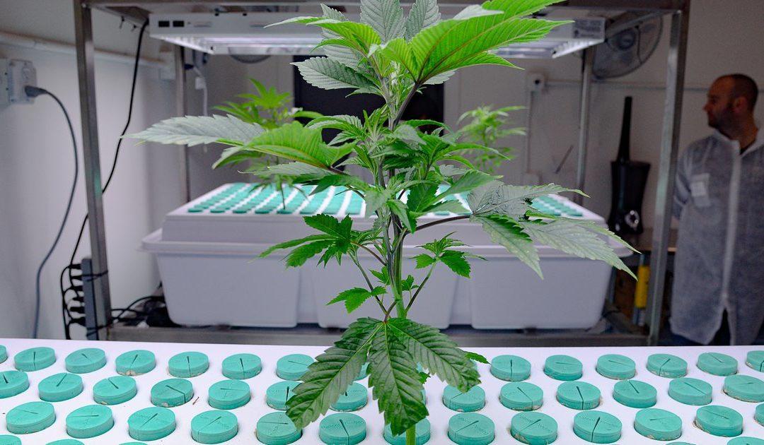Take a look inside one of Utah's first legal marijuana farms